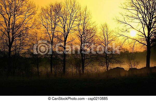 brumeux, levers de soleil - csp0210885