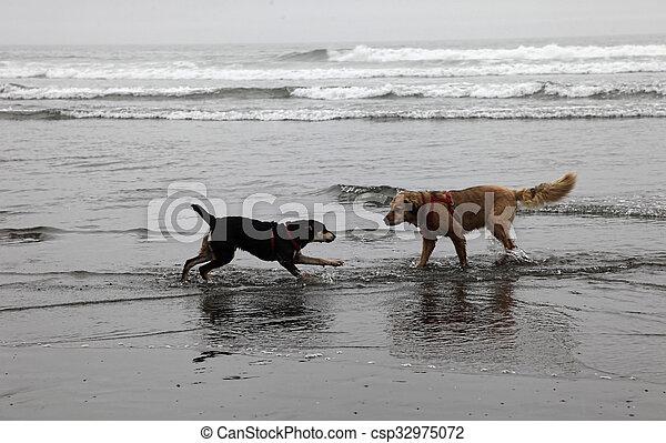 brumeux, plage, chiens, jouer - csp32975072