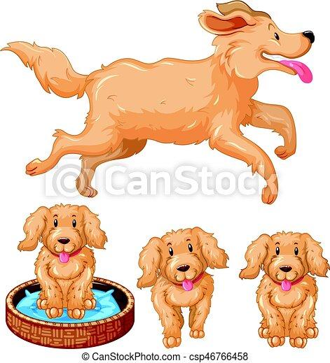 brun, fourrure, chien, chiots - csp46766458