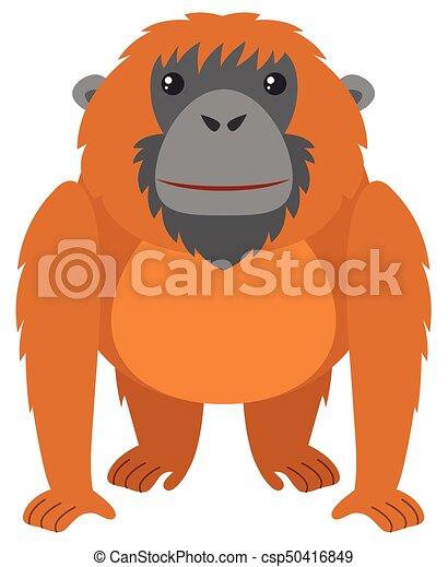brun, fourrure, orang-outan - csp50416849