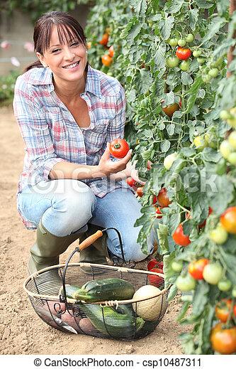 Brunette picking vegetables - csp10487311