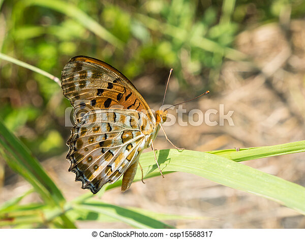 Brush-footed butterfly - csp15568317