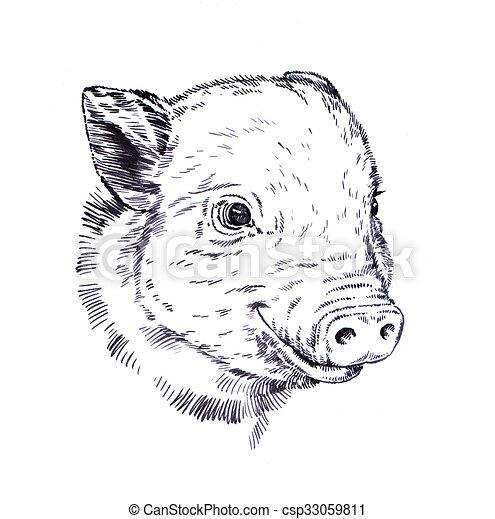 brush painting ink draw pig illustration - csp33059811