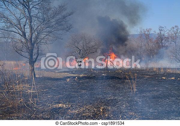 Brushfire 5 - csp1891534