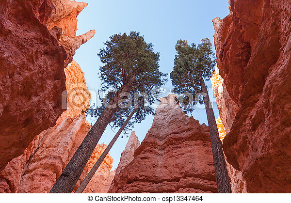 Bryce canyon national park in Utah  - csp13347464