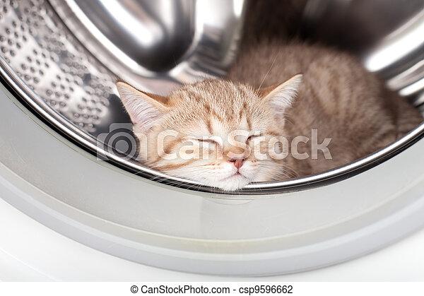 bucato, dentro, in pausa, gattino, rondella, dire bugie - csp9596662
