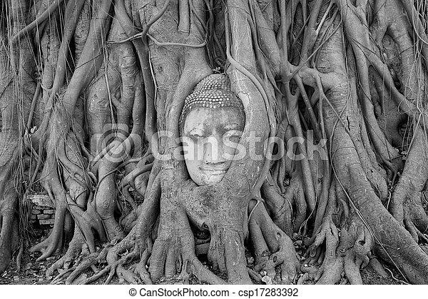 Buddha Head Statue in Banyan Tree, Thailand - csp17283392