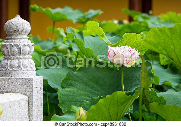 Buddha Lotus Flower Bloom On Pond Of The Temple