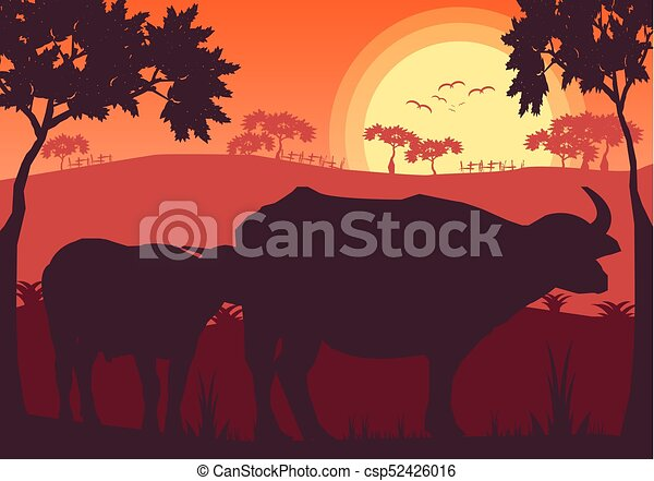 Line Art Vector Illustrator : Buffalo sunset evening and grassland meadow landscape vector