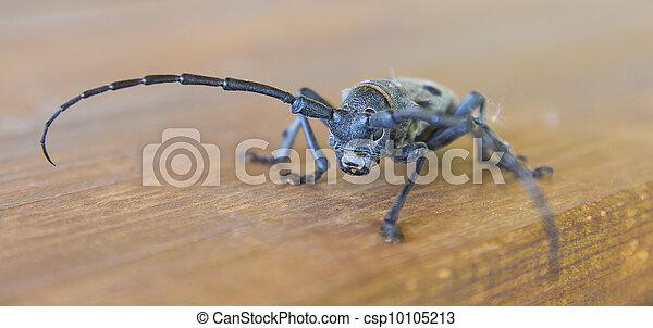 Bug eyes - csp10105213