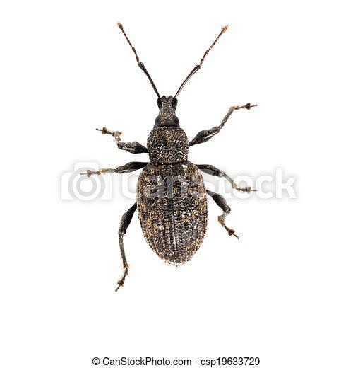 bug isolated on white - csp19633729