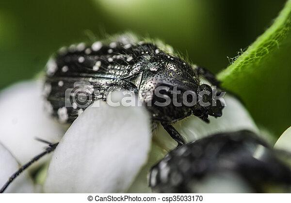bug - csp35033170