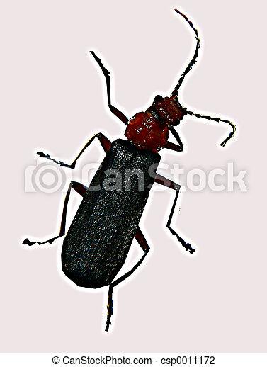 Bug - csp0011172