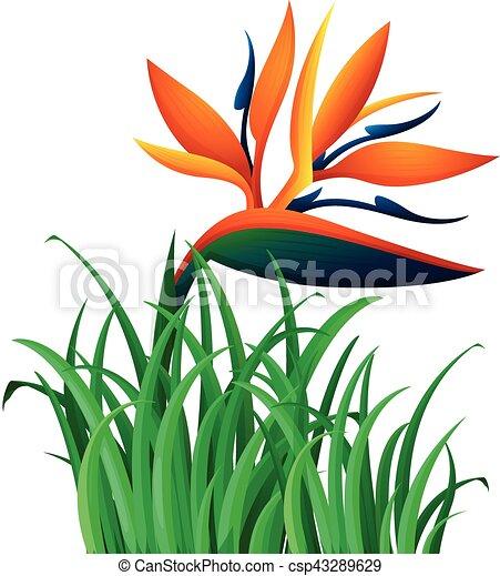 Buisson Fleur Oiseau Paradis Buisson Fleur Oiseau