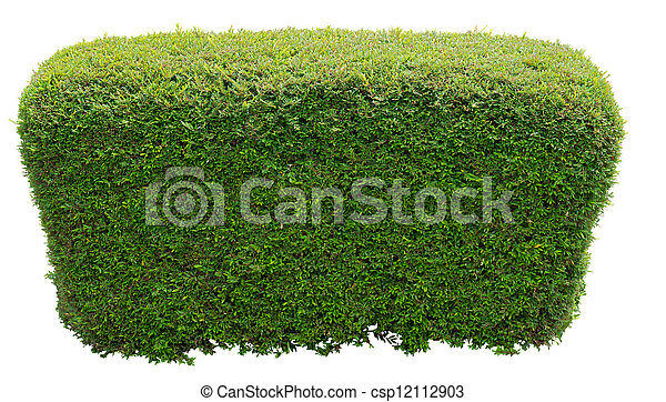 Taill forme buisson rond photographie de stock for Piscine de buisson rond