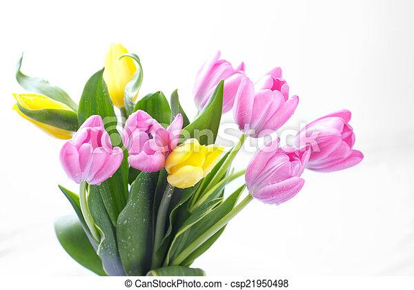 bukiet, purpurowy, tulipany - csp21950498
