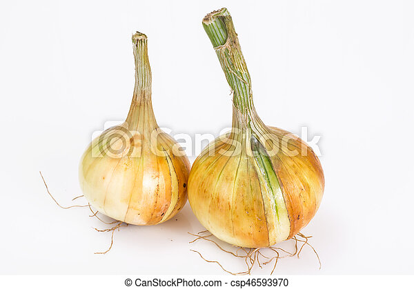 Bulbs of young onions - csp46593970
