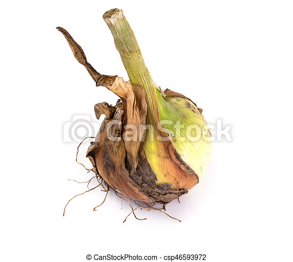 Bulbs of young onions - csp46593972