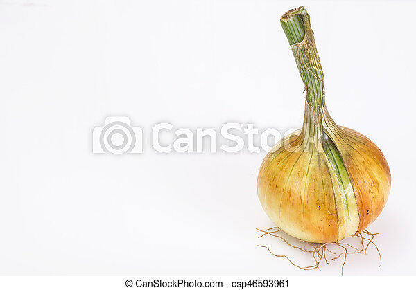 Bulbs of young onions - csp46593961