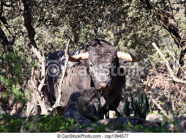 Bull  - csp1394577