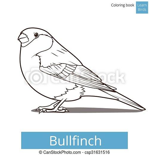 Bullfinch learn birds coloring book vector - csp31631516