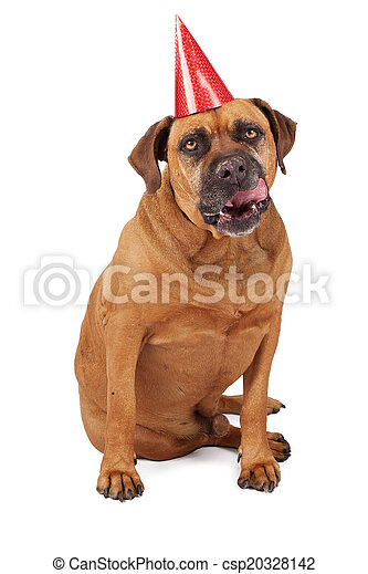 Bullmastiff Dog Wearing Birthday Hat Licking Lips