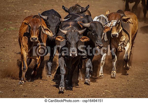 Bullrun - csp16494151