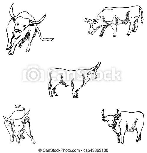 Bulls. Sketch pencil. Drawing by hand Vector - csp43363188