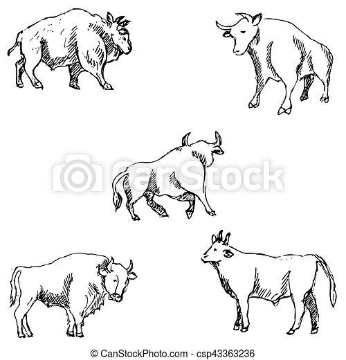 Bulls. Sketch pencil. Drawing by hand Vector - csp43363236