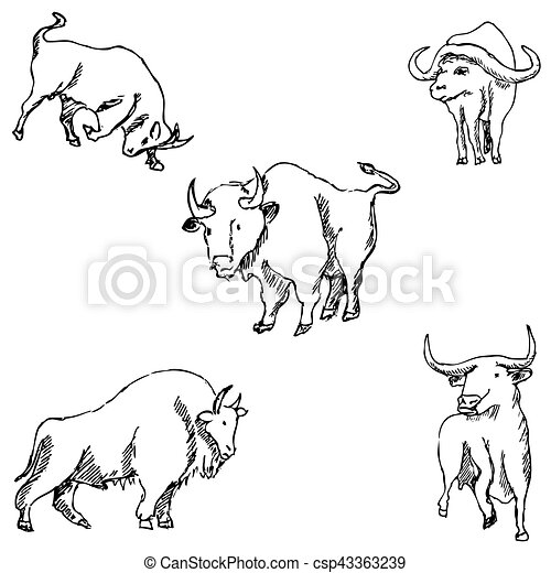 Bulls. Sketch pencil. Drawing by hand Vector - csp43363239