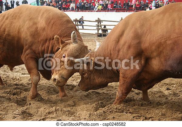 Bulls - csp0248582