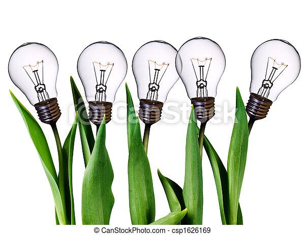 bulwa, lampa, tulipany - csp1626169