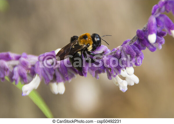 Bumble Bee on Flower - csp50492231