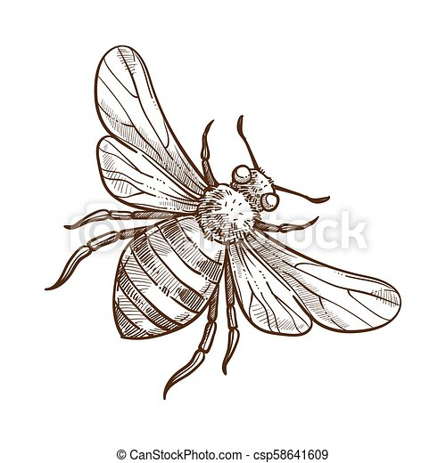 Bumblebee Insect Drawing
