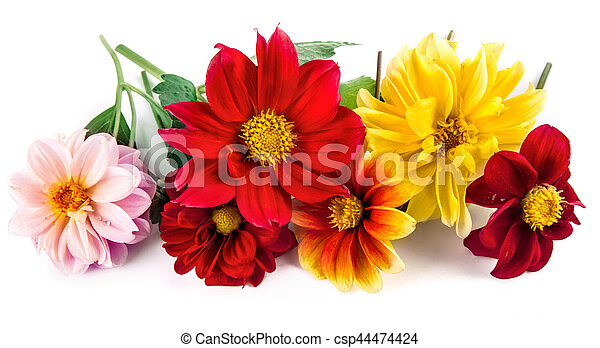 Bunch bright red and yellow flowers with green leaf beautiful dahlia bunch bright red and yellow flowers with csp44474424 mightylinksfo