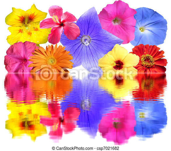 bunch flowers reflecting - csp7021682