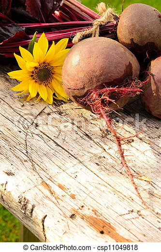 Bunch of beetroots  - csp11049818