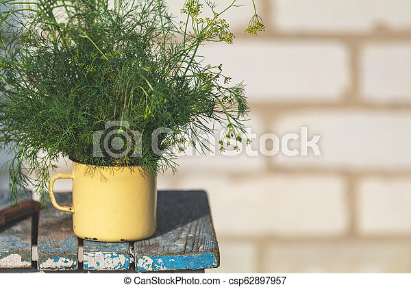 Bunch of dill in old yellow cup on vintage wooden table - csp62897957