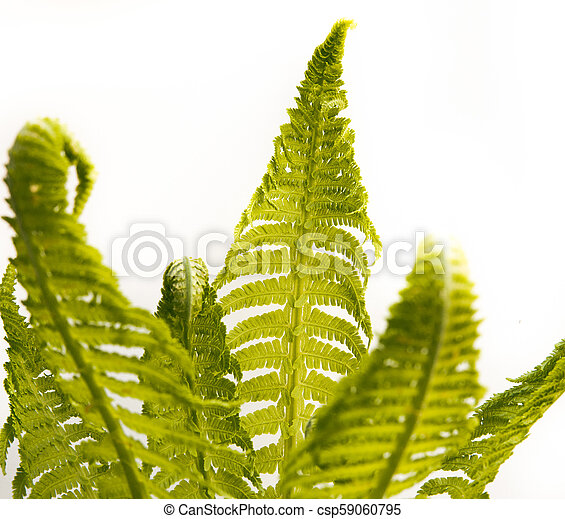 bunch of fern leafs - csp59060795