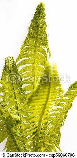 bunch of fern leafs - csp59060796