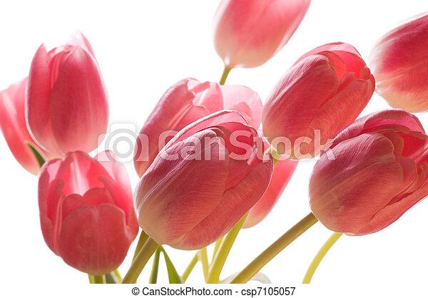 Bunch of flowers - csp7105057