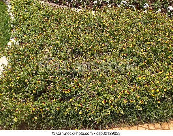 Bunch of Flowers - csp32129033