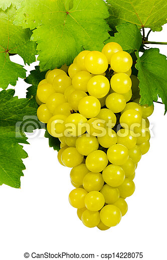 Bunch of grapes on white background - csp14228075
