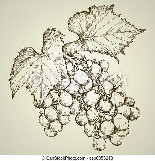 bunch of grapevine - csp6355213