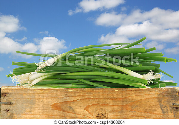 bunch of green onions - csp14363204