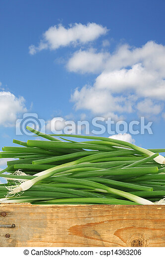 bunch of green onions - csp14363206