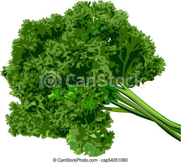 Bunch of parsley on a white background. - csp54051060