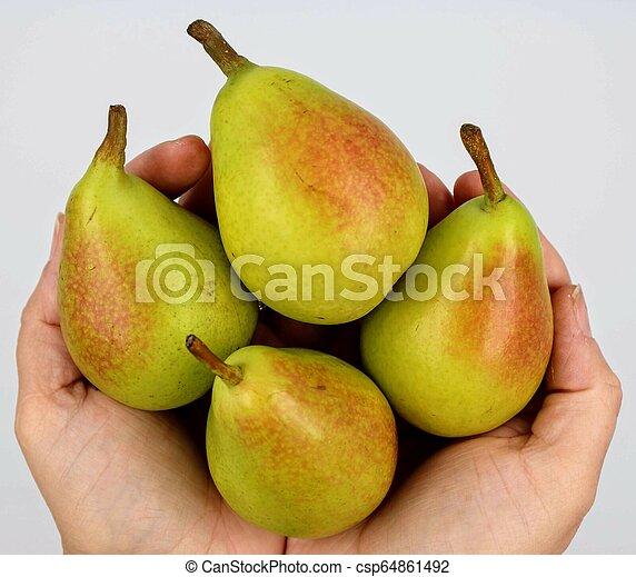 Bunch of pears held in hands - csp64861492