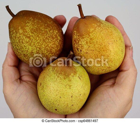 Bunch of pears held in hands - csp64861497