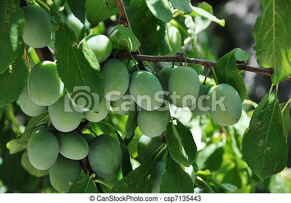 Bunch of plums - csp7135443